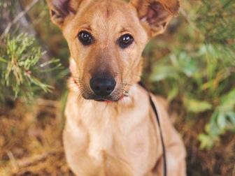 Скачать бесплатно фото  Чудесный щенок Тина в добрые руки, 50198969 в Москве