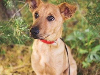 Смотреть фотографию  Чудесный щенок Тина в добрые руки, 50198969 в Москве