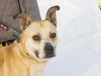 Скачать бесплатно изображение  Ищет дом удивительно умная собака-улыбака, 56334609 в Москве