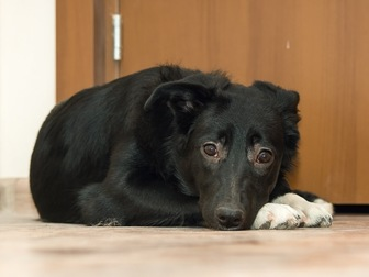 Просмотреть foto  Чудесный щенок Муха ищет дом, 58071485 в Москве