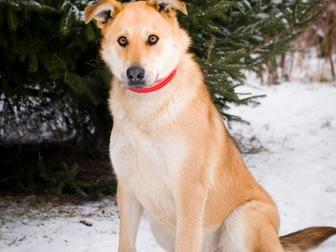 Просмотреть фото  Чудесная собака Сенди в добрые руки 58256394 в Москве