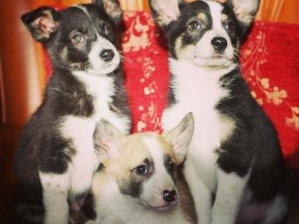 Новое foto  Милые щенки в добрые руки 58267925 в Москве
