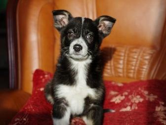 Смотреть фотографию  Милые щенки в добрые руки 58267925 в Москве