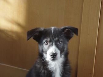 Увидеть фотографию  Милые щенки в добрые руки 58267925 в Москве