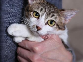 Уникальное фото  Очаровательная кошечка Люсси ищет дом! 58627200 в Москве