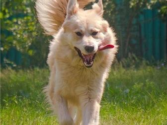 Свежее фото  Шикарный пёс Нортон в добрые руки, 68125562 в Москве