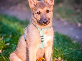 Уникальное фотографию  Чудесный щенок Кнопочка в добрые руки, 68128810 в Москве