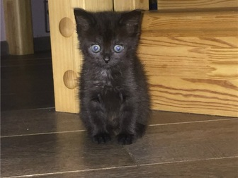 Смотреть фото  Ищет дом очаровательный котенок (девочка), 68132115 в Москве