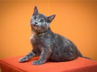 Просмотреть изображение  Милый котенок Арья в добрые руки, 68132649 в Москве