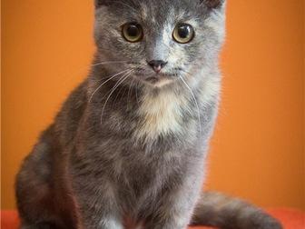Просмотреть фото  Милый котенок Арья в добрые руки, 68132649 в Москве