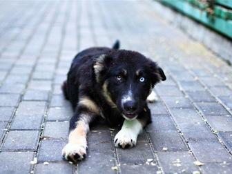 Уникальное изображение  Знакомьтесь, малыш Освальд с невероятно красивыми глазами! 68135738 в Москве