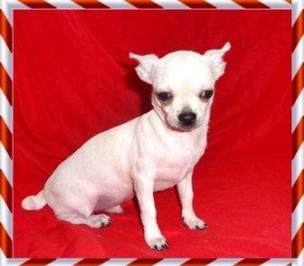 Фотография в Собаки и щенки Продажа собак, щенков Продается в качестве домашнего любимца подрощенный в Москве 8000