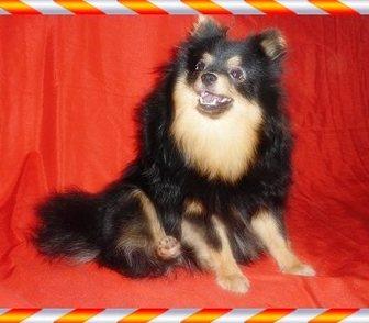 Изображение в Собаки и щенки Продажа собак, щенков Предлагаем в качестве домашних любимцев замечательных в Москве 14500