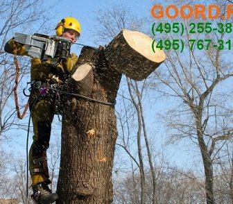 Изображение в Услуги компаний и частных лиц Разные услуги Кронирование деревьев в Москве и МО. Профессиональные в Москве 650