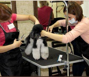 Фото в Домашние животные Разное Приглашаем всех желающих научиться стричь в Москве 0