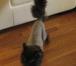 Фотография в Домашние животные Услуги для животных Грумер-стилист. Профессионально сделаю гигиенический, в Москве 1000