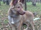 Фото в Собаки и щенки Продажа собак, щенков МУРМАНСК. БЭНКЛИ ПО-ТИХОНЬКУ НАЧИНАЕТ ИСКАТЬ в Мурманске 0