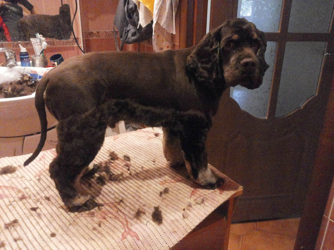 Договор купли продажи собаки щенка ркф скачать