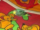 Фото в Домашние животные Птички Открыта бронь на птенцов волнистых попугаев в Мытищи 1500