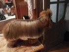 Фотография в Собаки и щенки Стрижка собак Профессиональная стрижка собак и кошек с в Мытищи 1300