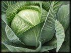 Фото в   Хотите получить высокий урожай капусты? Приобретайте в Набережных Челнах 15