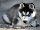 Скачать изображение Услуги для животных Дрессировка и воспитание собак в Набережных Челнах 35093480 в Набережных Челнах