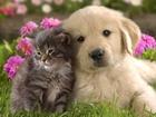 Новое фото Услуги для животных Дрессировка и воспитание собак в Набережных Челнах 35093485 в Набережных Челнах