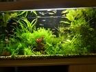 Изображение в Рыбки (Аквариумистика) Аквариумные рыбки Продаю излишки неприхотливых растений из в Наро-Фоминске 30