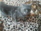 Фото в Кошки и котята Вязка окрас-голубой мраморный, привита, есть р в Невинномысске 0