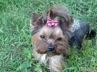 Изображение в Собаки и щенки Стрижка собак Стрижка животных в любое удобное для Вас в Нижнем Новгороде 0