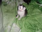 Фотография в Кошки и котята Продажа кошек и котят милая кошечка 2 месяца, к туалету приучена, в Миллерово 3000