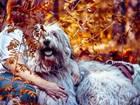 Южнорусская овчарка фото в Нижнем Новгороде