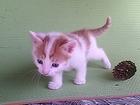 Смотреть изображение Отдам даром - приму в дар Весёлый котёнок ищет друга 66430671 в Нижнем Новгороде