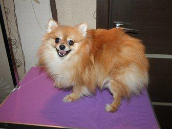 Скачать бесплатно foto Стрижка собак Стрижки собачек и кошек на дому, 32644682 в Нижнем Новгороде