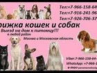 Новое фотографию Ветеринарные клиники Стрижка кошек и собак Выезд на дом в Москва и Московская область 37573653 в Ногинске