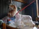 Фото в Собаки и щенки Стрижка собак Стрижка собак модельная и гигиеническая (чистка в Ногинске 0