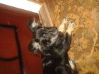 Уникальное изображение Найденные питомцы Срочно ищем хозяина потерявшейся собаки 45573463 в Новокузнецке