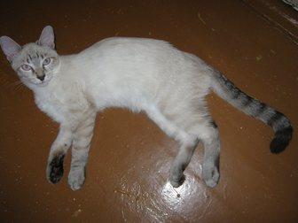 Просмотреть изображение Отдам даром - приму в дар Отдам котят 33272443 в Новокузнецке