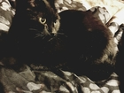 Новое фотографию Вязка кошек Ищем кота для первой вязки 62072409 в Новороссийске
