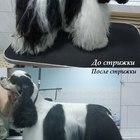 Стрижка кошек и собак в Новороссийске