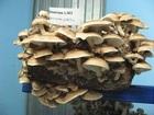 Свежее изображение  Для выращивания грибов шиитаке 36906240 в Иваново
