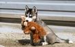 Племенной питомник предлагает к продаже щенков