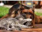 Уникальное foto Разное Передержка животных ЗооГостиница 33153947 в Новосибирске