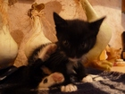 Фотография в Кошки и котята Продажа кошек и котят ищем СРОЧНО ! ! любящего заботливого хозяина в Новосибирске 10