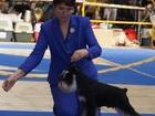 Изображение в Собаки и щенки Продажа собак, щенков Предлагаю для вязок кобеля цвергшнауцера. в Новосибирске 15000