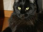 Изображение в Кошки и котята Продажа кошек и котят Предлагаю котят от титулованных родителей в Новосибирске 40000