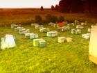 Новое foto  Продам пчел, пасеку, ульи, пчелосемьи 38682738 в Новосибирске
