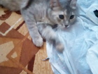 Скачать изображение Отдам даром - приму в дар кошечка 38699400 в Новосибирске