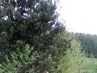 Фото в   Продам ровный участок с видом на лес, земля в Новосибирске 1000000