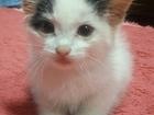 Скачать бесплатно foto Отдам даром - приму в дар Отдадим котёнка: Милый, добрый, красивый, и умный котёнок ждёт своих хозяев, 39859469 в Новосибирске